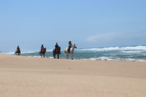A group riding horses along the sea shore. Perfect day for the beach